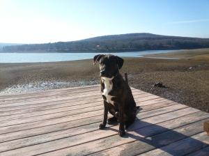 My dog, Sam, at the lake!
